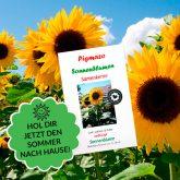 Sommer mit Sonnenblumen von Pigmazo